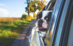 Holiday with the dog on Lake Garda: activities to do